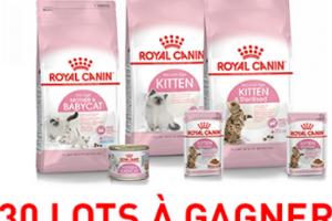 alimentation pour chaton Royal Canin